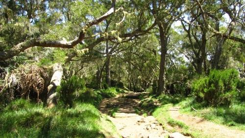 bosque de tamarindos