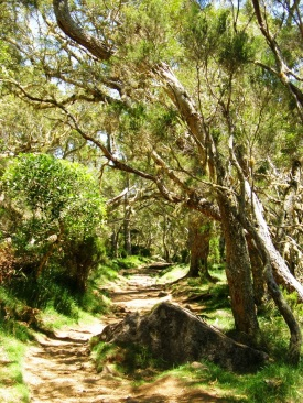 Bosque de tamarindos 2