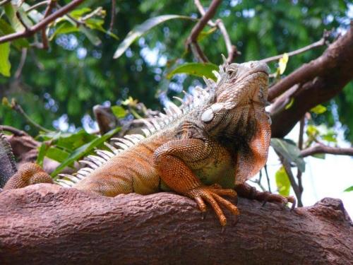 parque de las iguanas 1