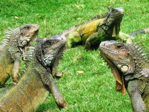 parque de las iguanas 3