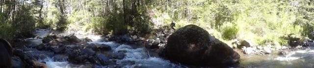 Selva patagónica