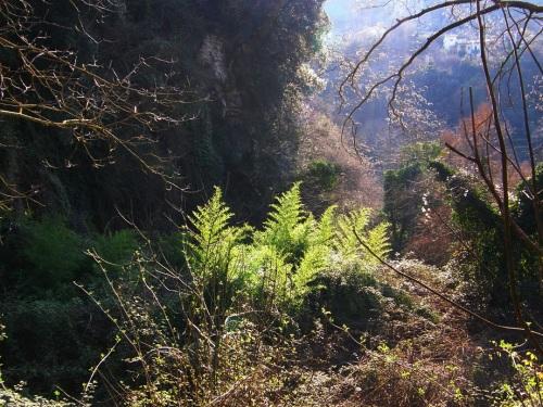 el bosque de Terni