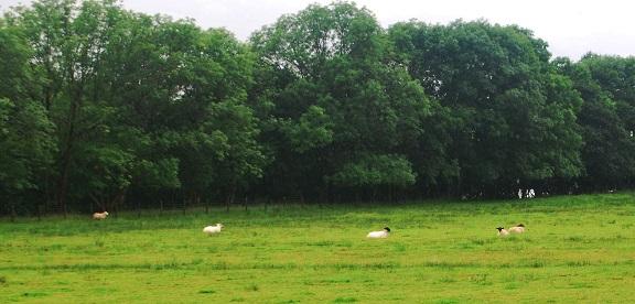 granjas escocesas