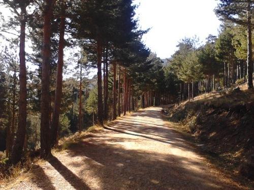 PR26 camino forestal de la barranca