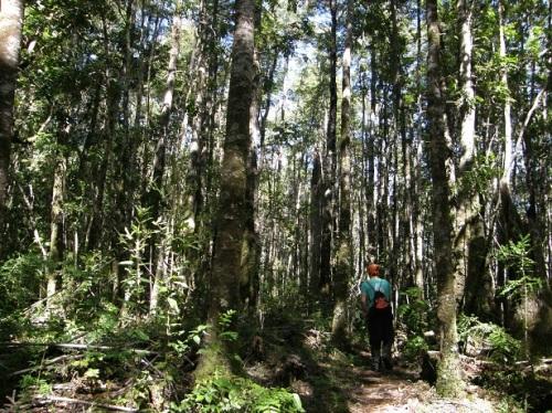 bosque humedo templado