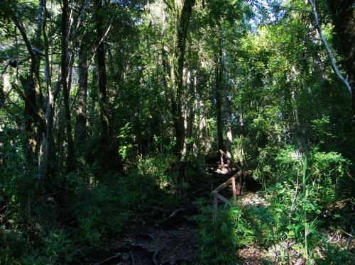 sendero del huilohuilo