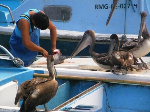 pescadores en puerto ayora