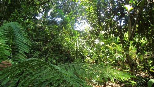 bosque plaine des cafres